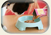 Feeding-cat-healthy-diet