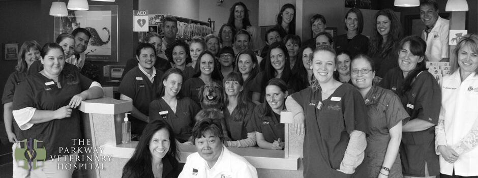 Parkway Vet Staff Team Photo