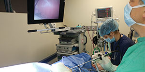 Minimally Invasive Surgery - Parkway Veterinary Hospital